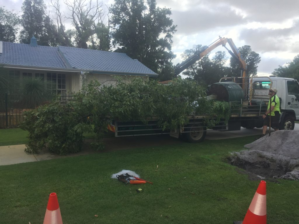 Tree-Planting-getting ready